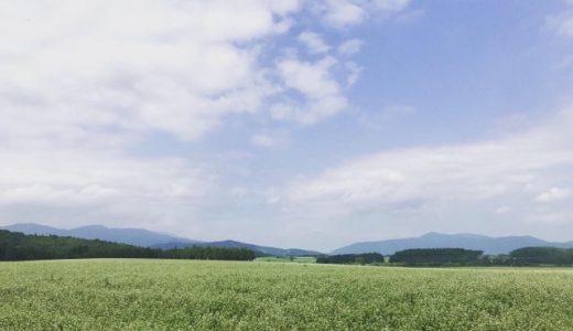 [日記]まるで白い絨毯!幌加内町のそば畑ビュースポット